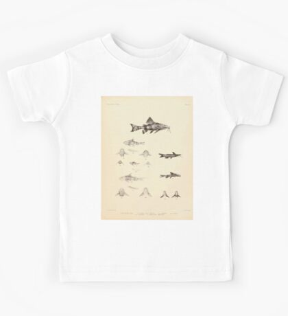 The fishes of India by Francis Day 103 - Amblyceps mangois Erethistes hara Kids Tee