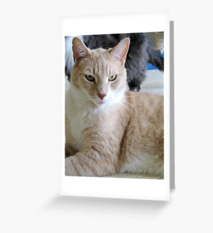 Grover a shelter cat Greeting Card