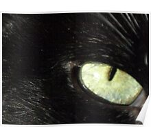 Eye of the Cat Poster