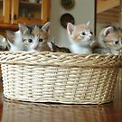babies in the basket by elisaperusin