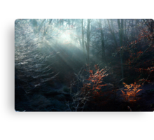 First Rays on a Frosty Morning Canvas Print