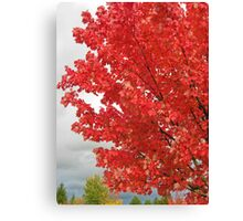 fall blast Canvas Print