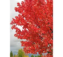 fall blast Photographic Print
