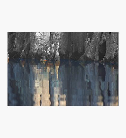 Cypress reflection Photographic Print