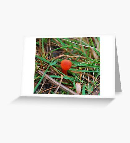 Baby scarlet wax cap Greeting Card