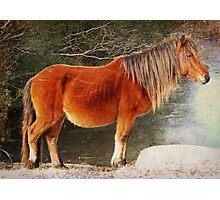 Assateague Pony Photographic Print