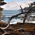 Sea Tree by OldBirch