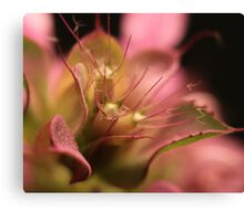 King of Wildflowers Canvas Print