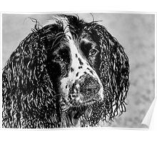 Wet & Sandy Poppy Poster