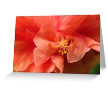 Orange Hibiscus Macro Greeting Card