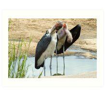 Maribou Stork Cleanup Art Print