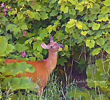 Deer Nibbling Wildflowers 2 by Yannik Hay
