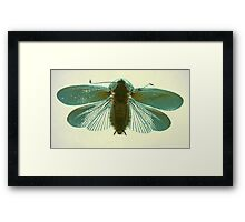 Blue Moth Framed Print