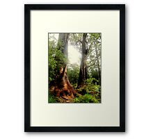 Tingle Tree Framed Print