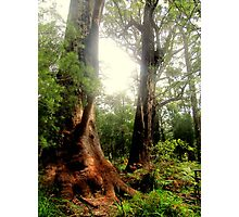 Tingle Tree Photographic Print