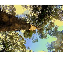 A little perspective Photographic Print