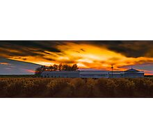 Tregunno Farms at sunset Photographic Print