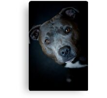 Are you lookin at me?  Canvas Print