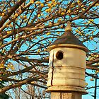 Bird House! by kodakcameragirl