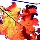 Autumn by bkphoto
