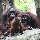 Family time, Singapore Zoo. by elphonline