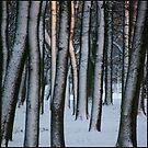 Sunny winter park by Bluesrose