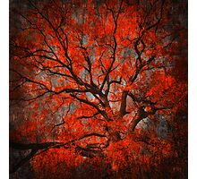 The Red Is King Photographic Print