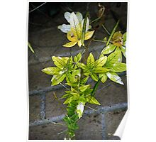 Stalk with Seed Pods Poster