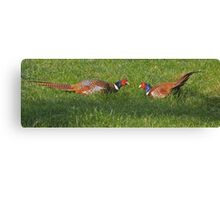 Pheasants with attitude! Canvas Print