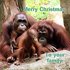 Merry Christmas to your family. by elphonline