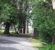 a well worn path by aussieazsx
