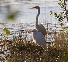 Egrets At Dusk by byronbackyard