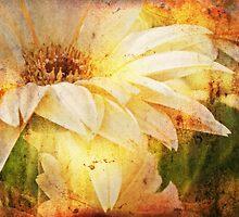 Petals by Nadya Johnson