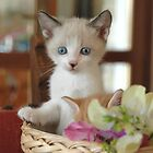 kitty in the basket by elisaperusin