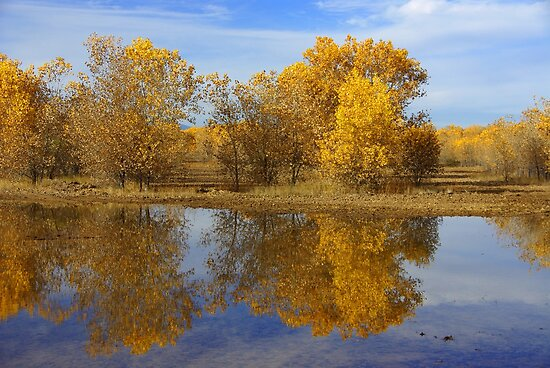 Fall Mirror by JBoyer