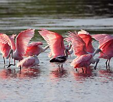 Roseated Aerobics by noffi