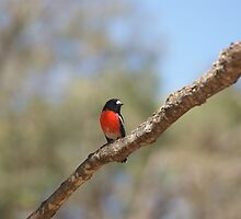 bird on a wire by kilroy-is-here