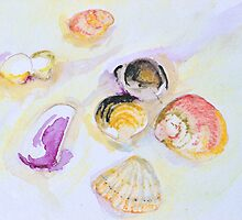 Shells - Jimmys Beach Australia by Gareth Stamp