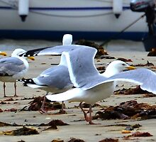 Gulls by the Harbour at Lyme, Dorset UK by lynn carter