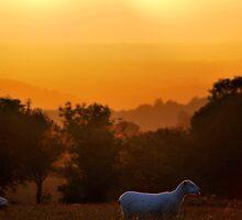 'Evening Graze' by DaveButt