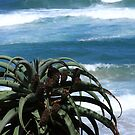 The blues and greens of KZN by Lauren Banks