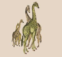 A group of Giraffes. by albutross