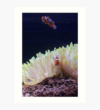 Nemo Art Print