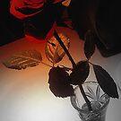 Rose by Neeraj Nema