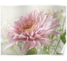 Pink Chrysanthemums 6 Glimmer Poster