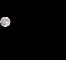 Full Moon Rising by RobertW3