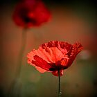 Poppy Twins by geoff curtis