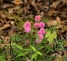 Pink Wild Flowers by Rick  Friedle
