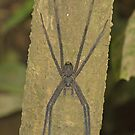 Trunk Spider by JimJohnson