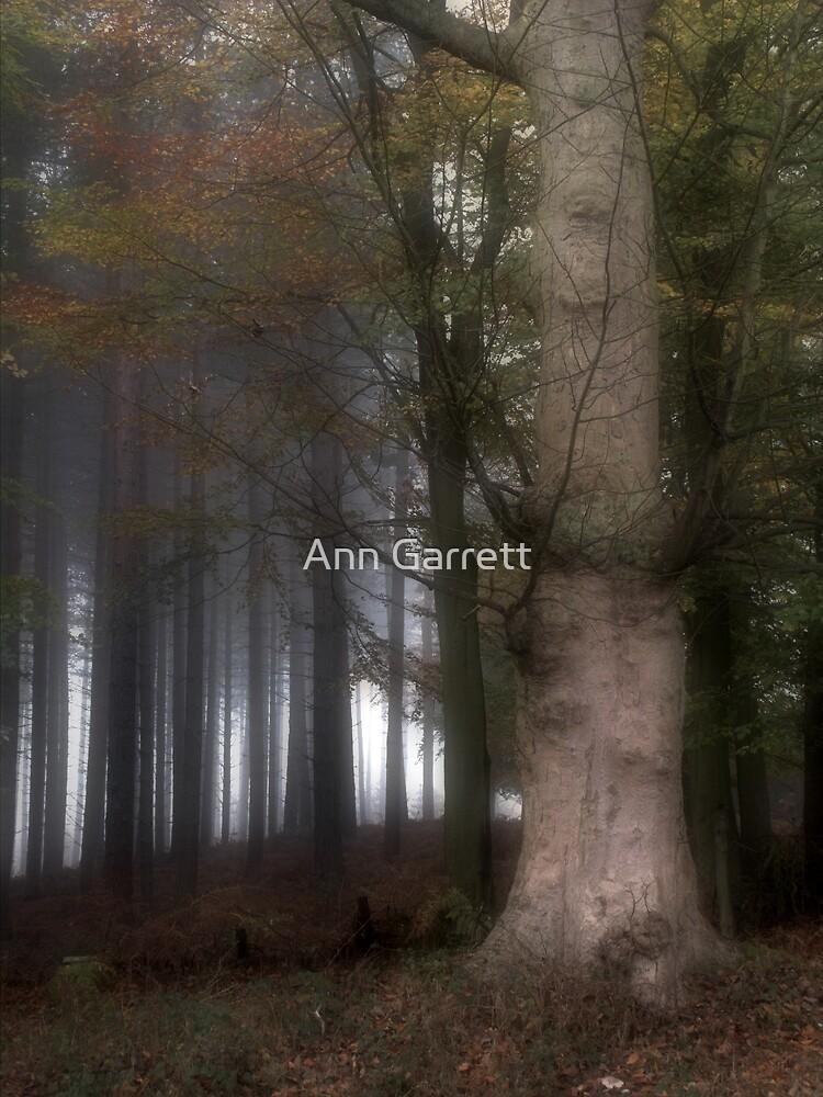 The Dark Side by Ann Garrett